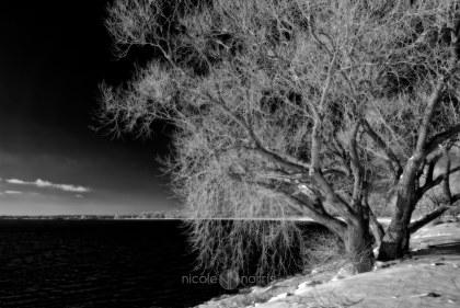 © Nicole Norris